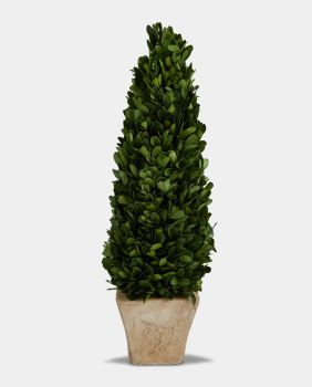 Preserved Boxwood Topiary Cone / Tree with Pot - 40 cm