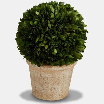 Preserved Boxwood Topiary Ball / Tree with Pot - 30 cm