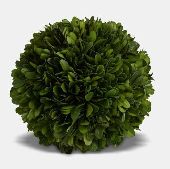 Preserved Boxwood Topiary Ball  -15 cm