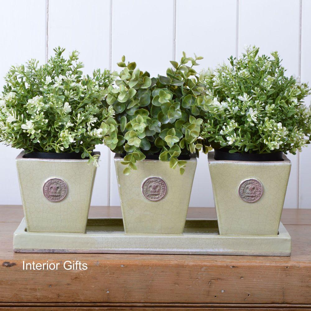 Kew Tapered Herb Pots & Tray - Set of Three - Royal Botanic Gardens - Grape