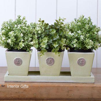 Kew Tapered Herb Pots & Tray - Set of Three - Royal Botanic Gardens - Grape Green