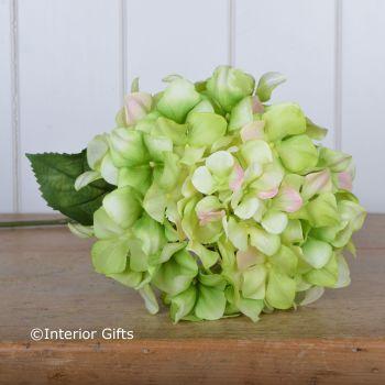 Faux Silk Hydrangea Macrophylla Stem in Faded Green - 67 cm
