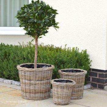 Rattan Wicker Basket Planter / Plant Pot  Round / Woven Rim  - Natural