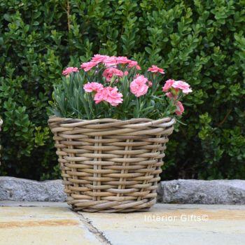 Rattan Wicker Basket Planter / Plant Pot  - Natural - 18.5 cm H