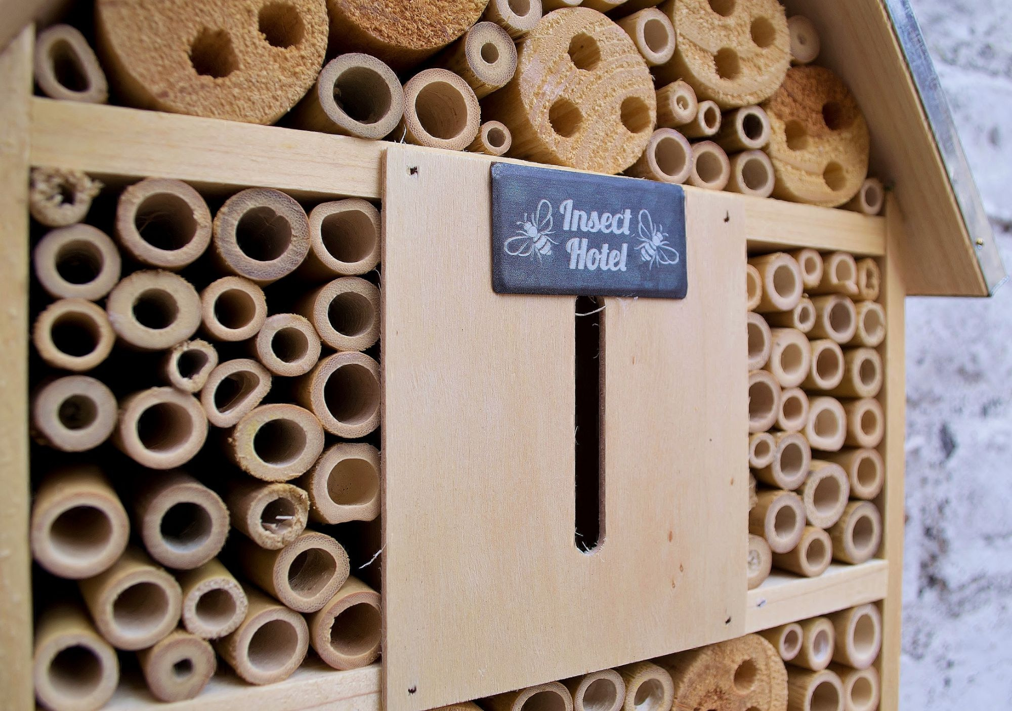 Insect Hotel - Buzzing Bee Food Wraps