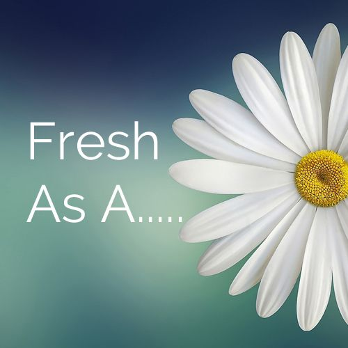 "A picture of a daisy with the words, ""Fresh as a..."""