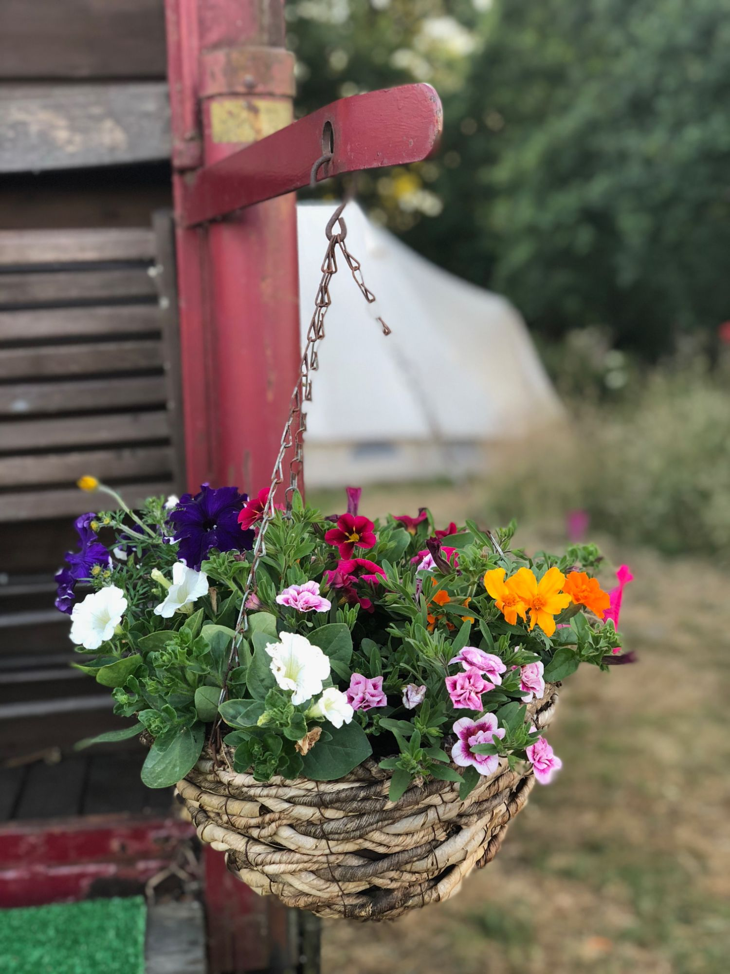 horsebox_flowers_2019