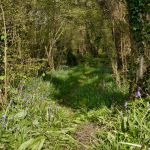 martins_wood_footpath2