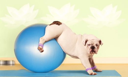 pilates-bull-dog-gallery