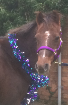 ali pony