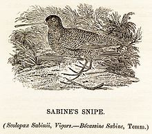 A History Of British Birds, 1816.