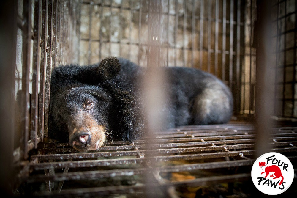 Add your voice to this petition to stop bear farming in Vietnam now