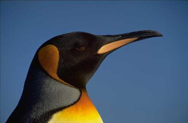 Click here to waddle away to Falklands Conservation