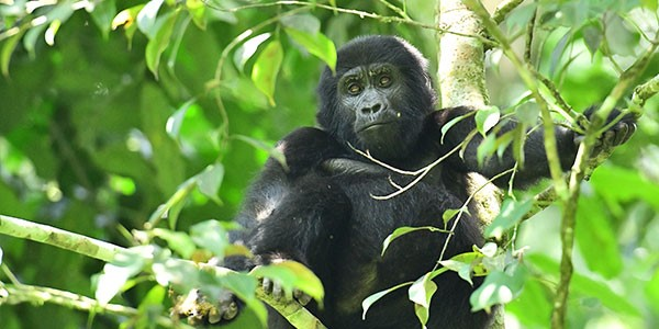 Visit the African Wildlife Foundation's website for more info
