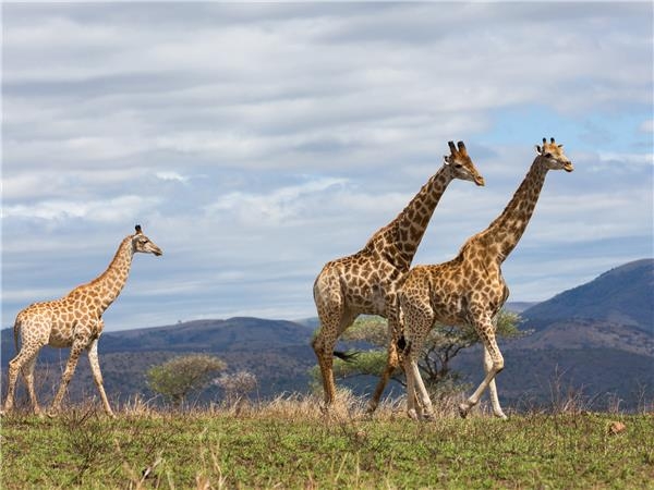 Click here for wildlife holiday ideas in Kenya listed on Responsible Travel