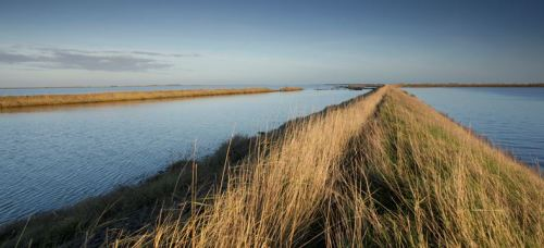 Find out more about the RSPB's Wallasea Island Wild Coast Project