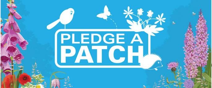 Worcestershire Wildlife Trust are asking people to pledge a patch for wildlife