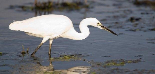 Go to BirdLife International for more information
