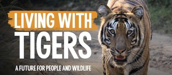Find out more about Born Frees work to help tigers