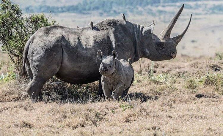 There were 17 rhino births in 2018