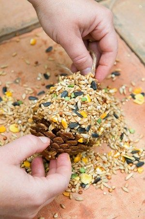 Make a bird feeder for wildlife at home