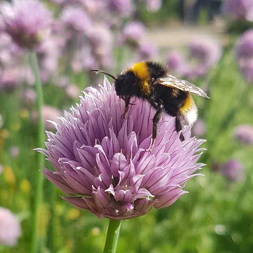 Make your garden wildlife friendly