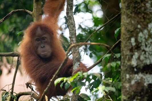Good News for Rainforests!