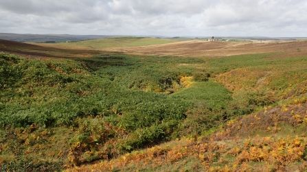 600 acres at Benshaw Moor is safe, thanks to a united effort