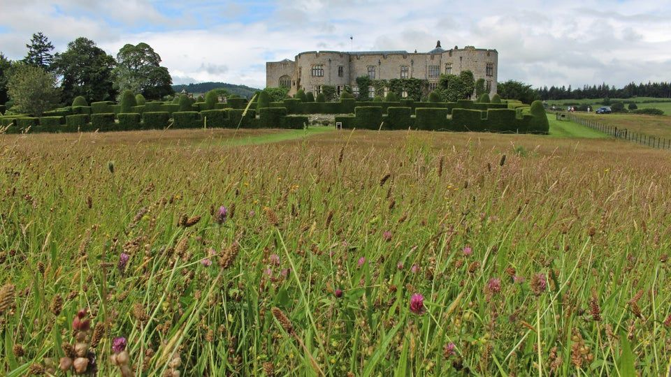 Wildflowers are blooming at Chirk Castle in Wales