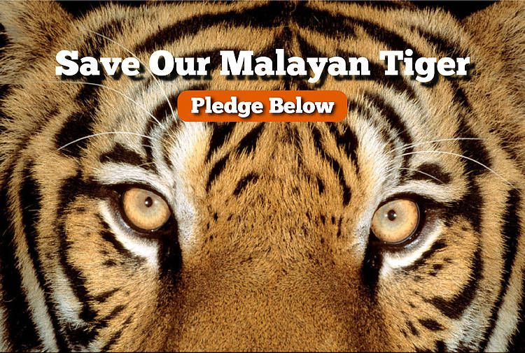 Please give your support to WWF Malaysia's Tiger Pledge