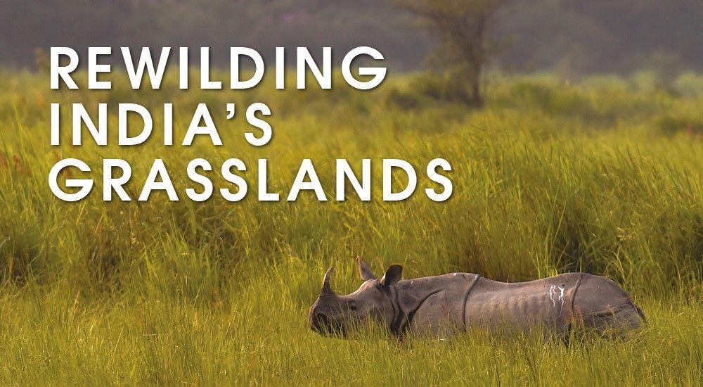Help Durrell rewild India's grasslands