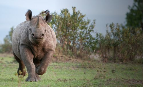 Give rhinos your support this World Rhino Day on 22 September 2019
