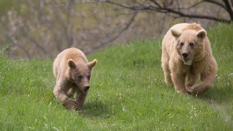 Rescued bears can begin a new life