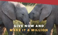 Join the herd and make it a million for African Wildlife