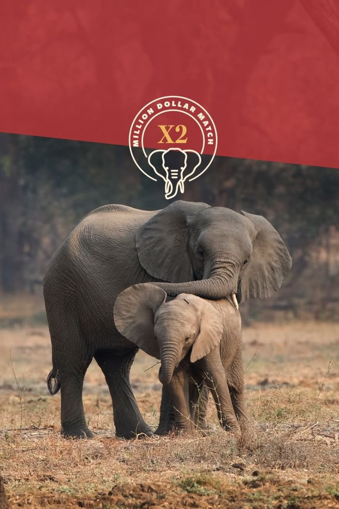 Give now and make it a million to help African Wildlife