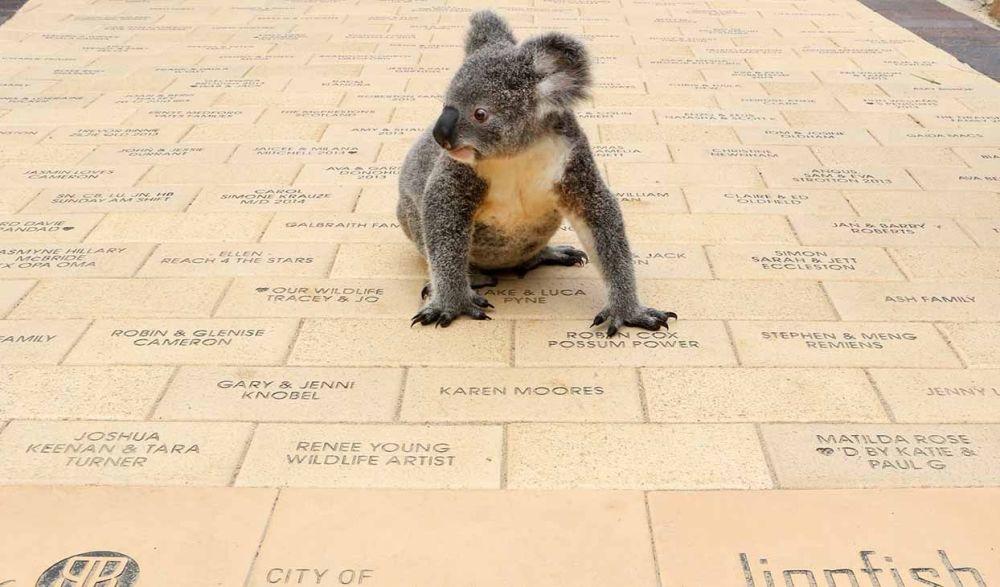 Buy a Walkways for Wildlife