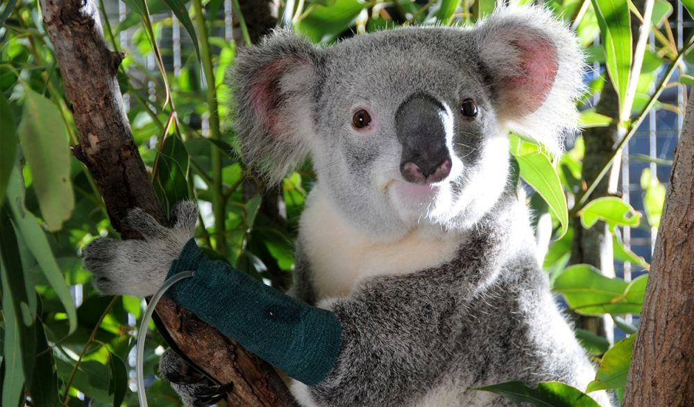 Help Australian wildlife - Buy a Tree