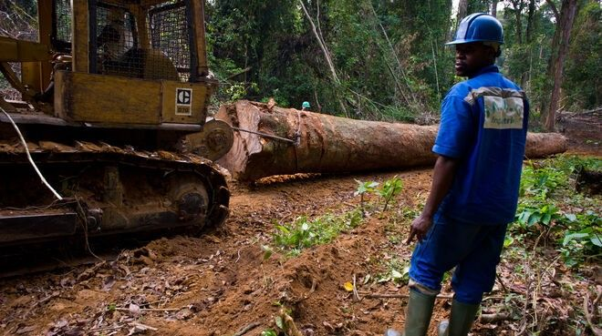 Stop the depletion of forests in Cameroon