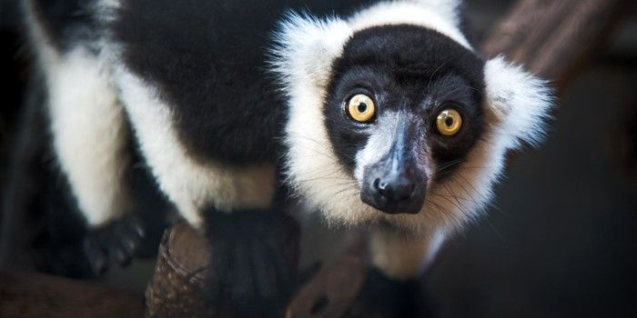One Minute Action :  Help save the animals in the rainforests of Madagascar