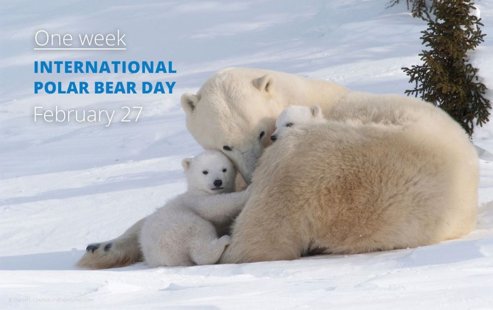 Find out more about International Polar Bears Day