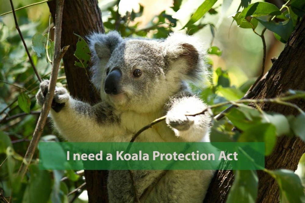 Save the Koala - find out more about the Koala Protection Act