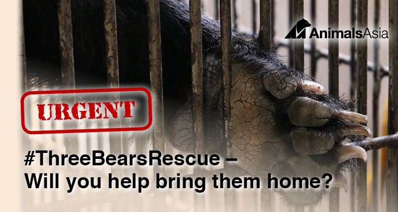 Help Animals Asia rescue these three bears from a bile farm
