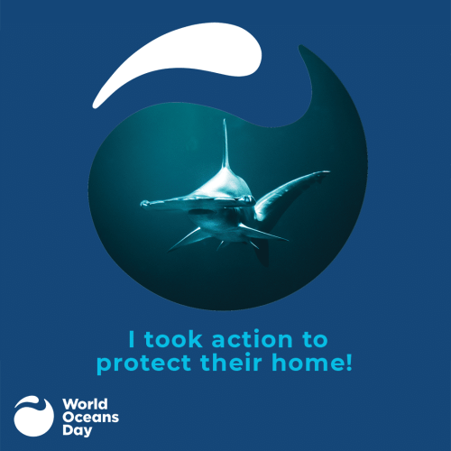 Speak up for nature - there are resources you can download from the World Ocean Day 2020 website