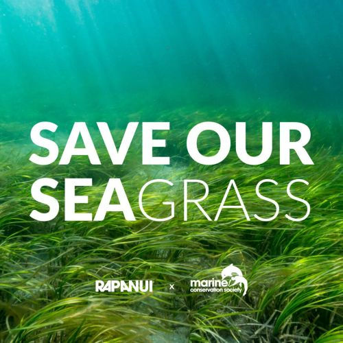 Rapanui wants to help Save our Seagrass
