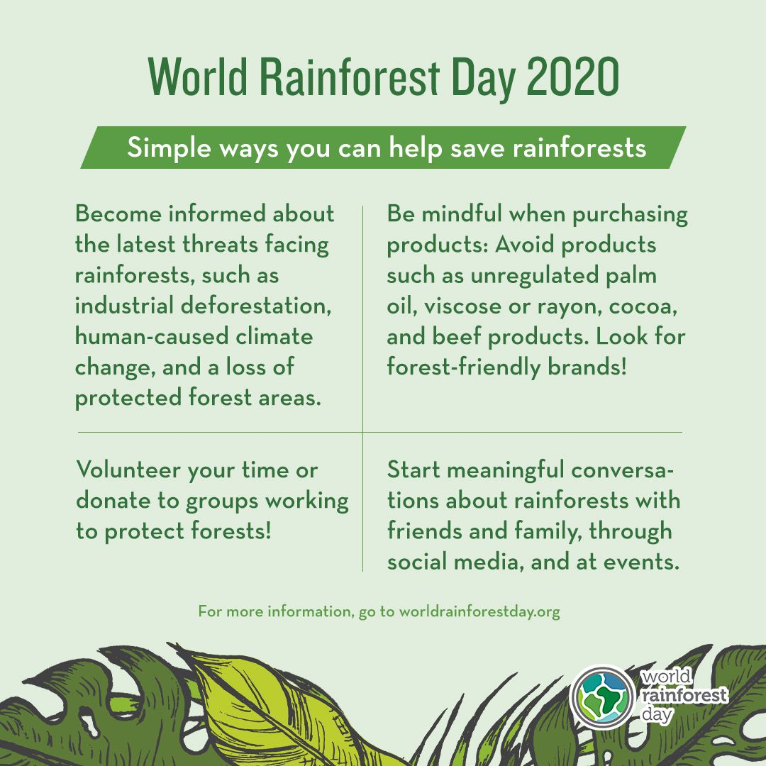 Simple ways to help save rainforests