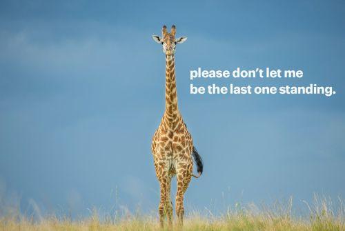 Help giraffes