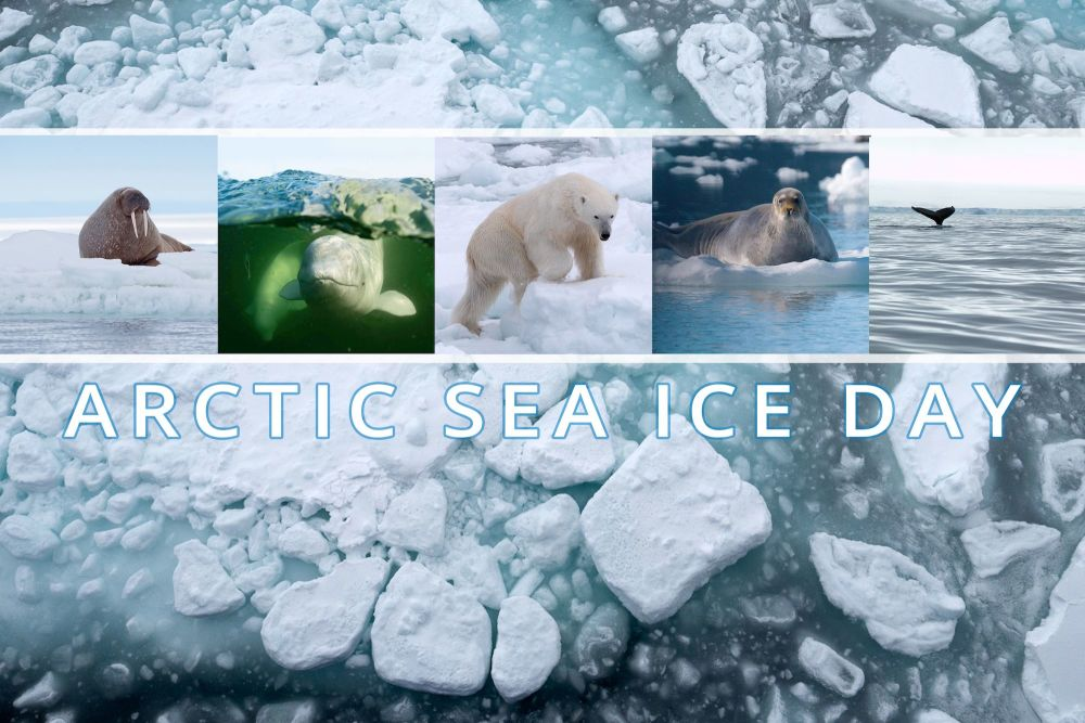 Find out more about Arctic Sea Ice Day with Polar Bears International
