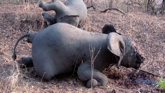 Let's stop this Poaching Pandemic