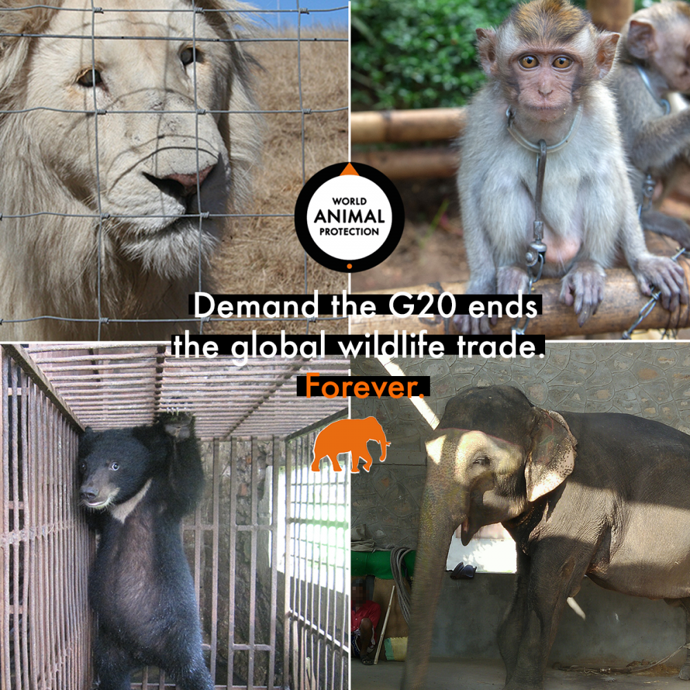 Sign World Animal Protection's Petition to the G20 here
