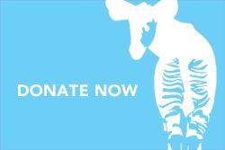 Donate to the Okapi Conservation Project